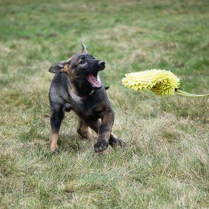 Mordedor para cachorros ABC Sport Klin